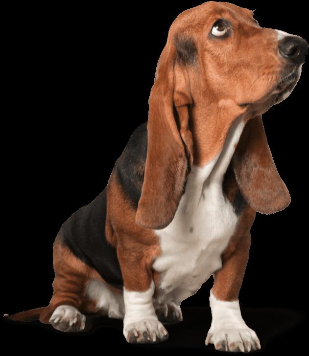 FP DEBBIES PET GROOMING SHAMPOO FLINT MICHIGAN DOG GROOMER CATS HAIR CUT CLOSE TO ME NEAR TOP BEST FIND