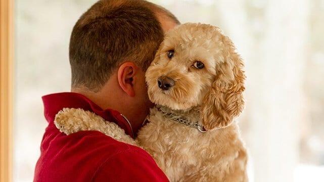 HUG DEBBIES PET GROOMING SHAMPOO FLINT MICHIGAN DOG GROOMER CATS HAIR CUT CLOSE TO ME NEAR TOP BEST FIND