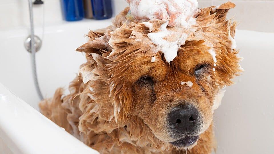 NEAR ME DEBBIES PET GROOMING SHAMPOO FLINT MICHIGAN DOG GROOMER CATS HAIR CUT CLOSE TO ME NEAR TOP BEST FIND